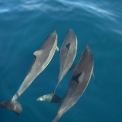 Hawaii Dolphin Watching